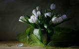 76 - White Tulips